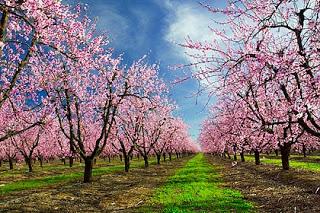 spring-trees